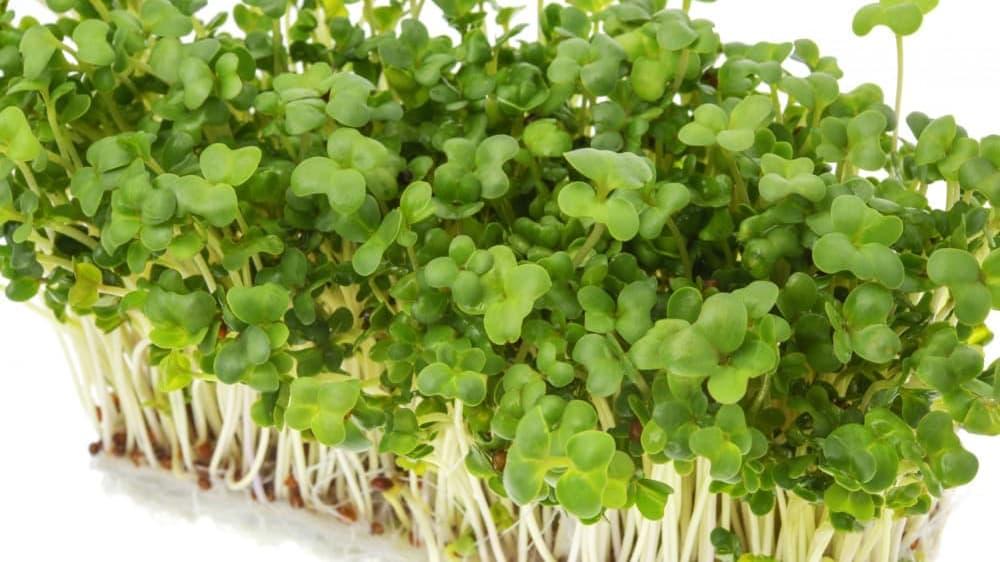 最近話題になってる、スプラウト。スプラウトとは、発芽直後の植物の新芽のことで、発芽野菜のこと。