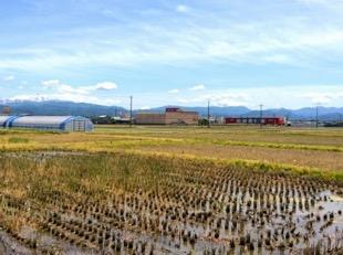 お店のある能美市のほとんどは田畑か山です。