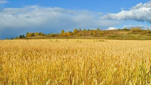 小麦アレルギーとパン屋さん